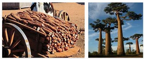 Madagascar Economy